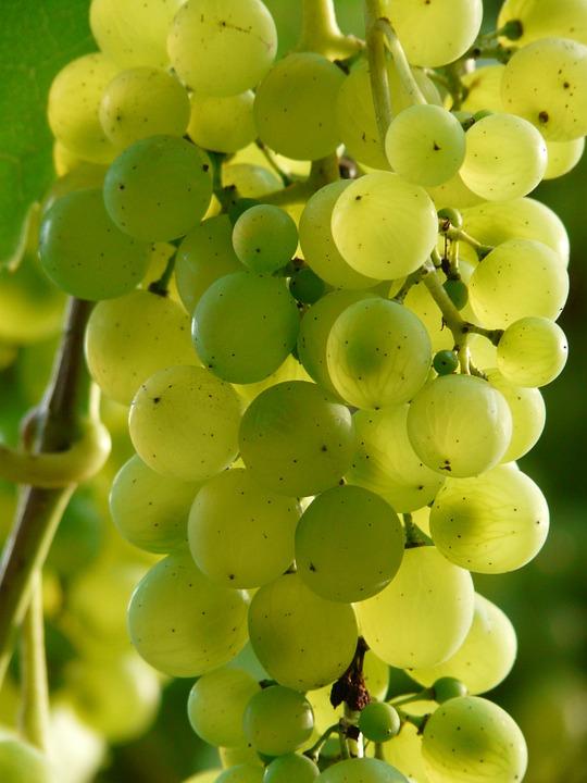 Skalen 0-140 Oechsle 0-32 Brix 0-27 KMW Hand Refraktometer für Wein Winzer